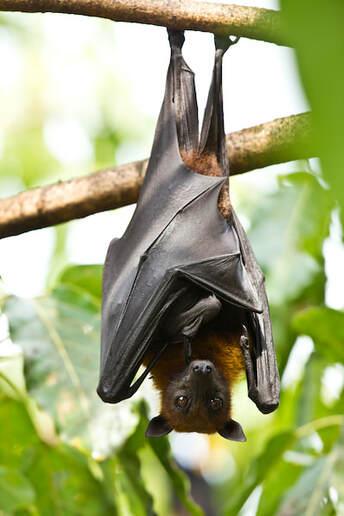 Can Exterminators Get Rid Of Bats?
